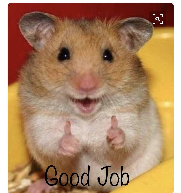 Cute animals! | Cute hamsters