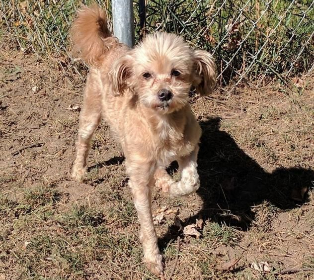 Adopt Heidi on Petfinder Terrier mix dogs, Dogs, Terrier mix