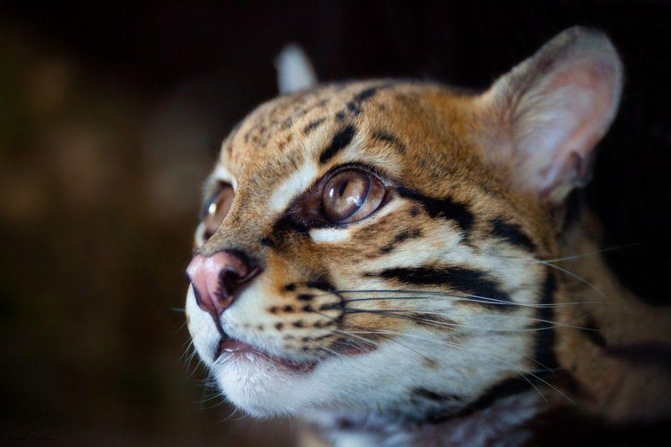 30 Incredible Images Of North American Wildlife Wildlife