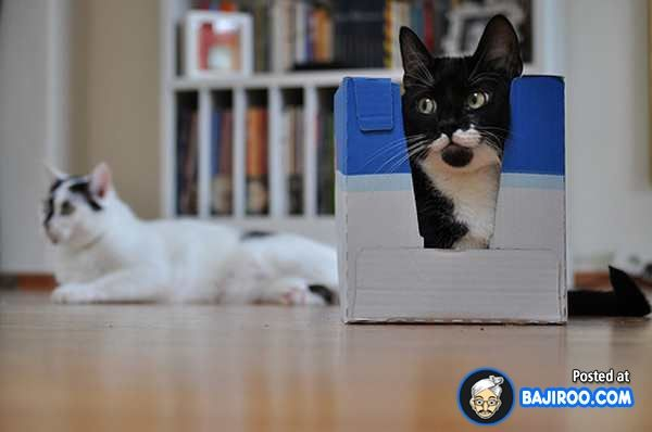 Funny Cats in Boxes (Photo Gallery) Cat shelter, Funny