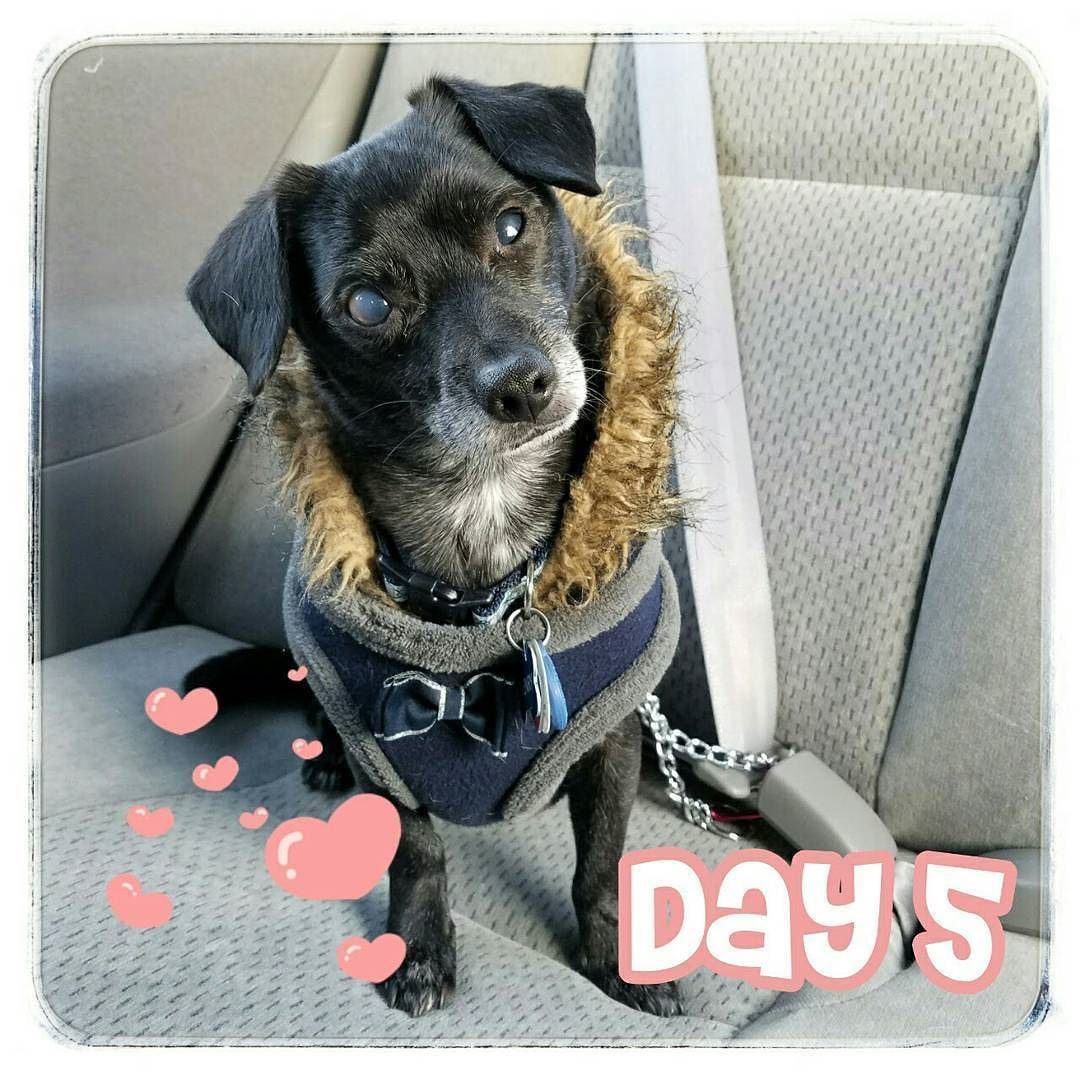 Counting down to Valentine's Day with the things I love.   Every adventure has to start somewhere so naturally I love car rides! From a quick jaunt to @petsmart to a day at the beach to a long family road trip they all start with a car ride. So buckle up it's time for some fun!   Do you love car rides?  #14daysofvalentines # #ilove #carrides #doglove #favoritethings #happydog #cutedog #love #roadtrip #dogsincars #muttrider #dogsinjackets #dogsincoats #valentinesday #chiweeniesofinstagram…