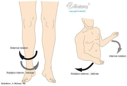 Lateral rotation; External rotation / Medial rotation; Internal ...