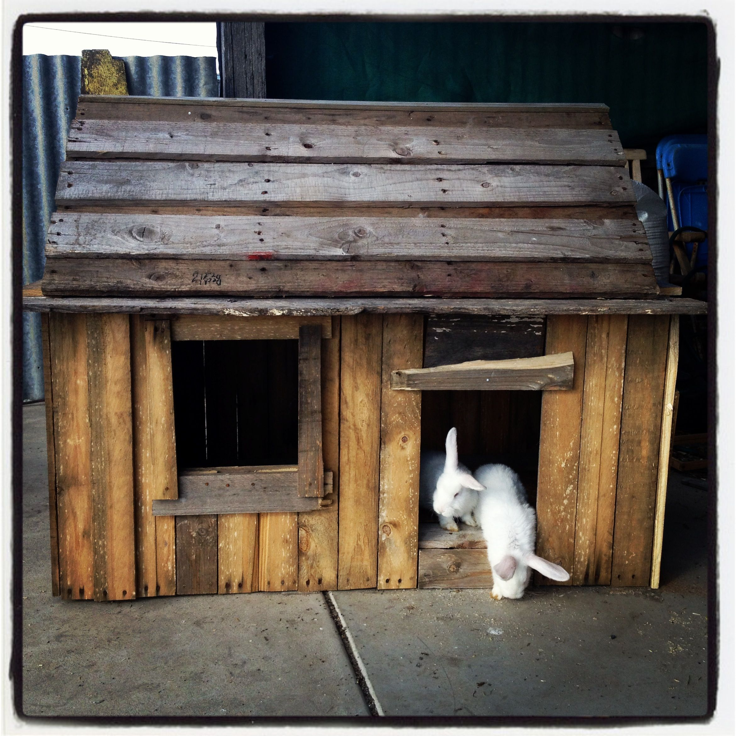rabbit hutch made from pallets wattlebank park farm