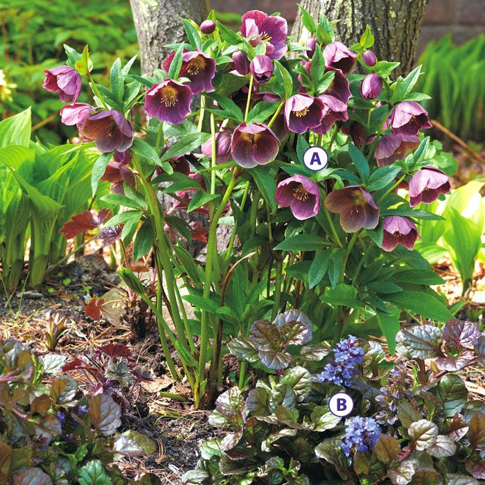 Hellebores are wonderful spring plants.  Even somewhat evergreen.