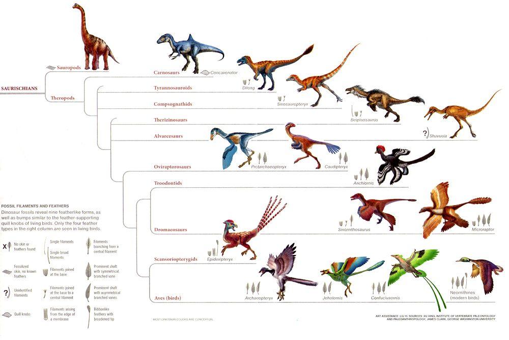 статье птицы произошли от динозавров вакансии отделе закупок