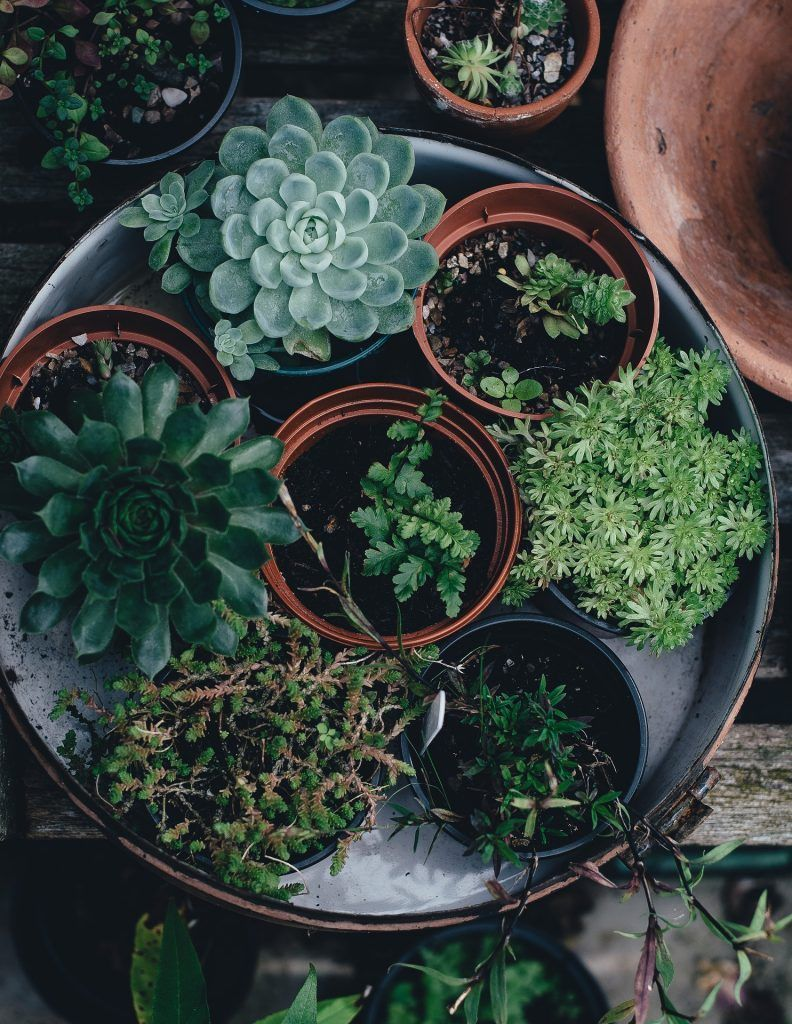 Can you use coffee grounds for indoor plants plant pot