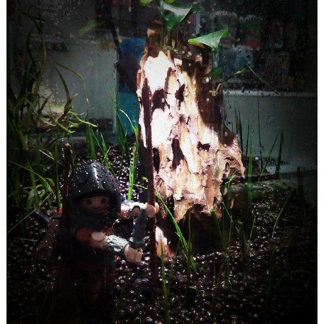 Hemos preparado otro nanoacuario para nuestros jóvenes acuarofilos! ¿Quieres uno para tí? Llamanos y pregunta! #nanoinvert #nanoacuario #playmobil #anubianana #dragon #eleocharis #regalonavidad #regaloperfecto #navidades #navidad #sorprende #regalosorprendente #playmobilfreak #acuariopersonalizado