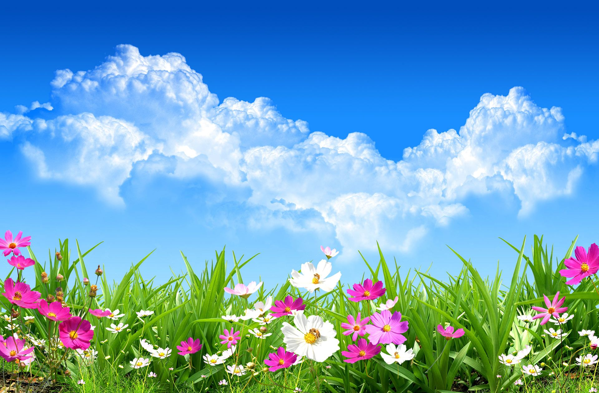 Messenger Plus Flowers With A Blue Sky With Images Spring