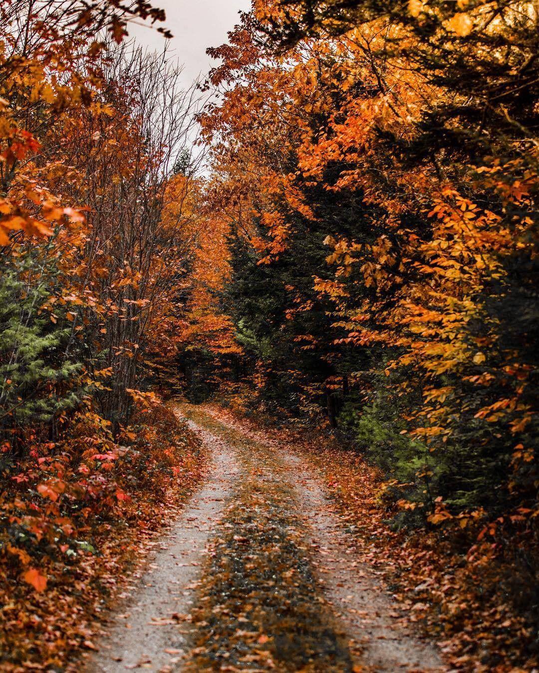 Autumng Asthetics: 𝐈𝐧𝐬𝐭𝐚𝐠𝐫𝐚𝐦: 𝐚𝐧𝐝𝐫𝐞𝐲𝐚𝐚𝐯𝐢𝐥𝐥𝐞𝐠𝐚𝐬 ; 𝐏𝐢𝐧𝐭𝐞𝐫𝐞𝐬𝐭: 𝐚𝐧𝐝𝐫𝐞𝐲𝐚𝐚𝐯𝐢𝐥𝐥𝐞𝐠𝐚𝐬