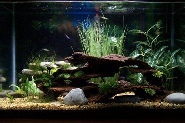 29 gallon java moss small java ferns and artificial plants for 10 gallon fish tank decoration ideas