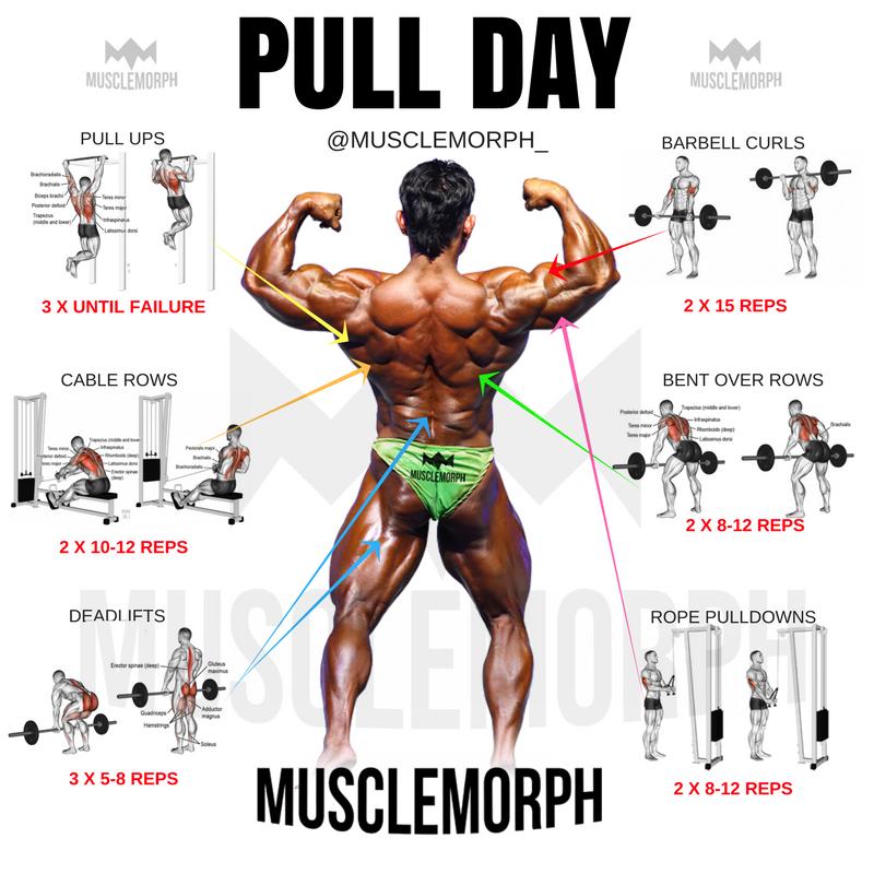 PULL DAY EXERCISE WORKOUT MUSCLEMORPH MUSCLEMORPHSUPPS.COM