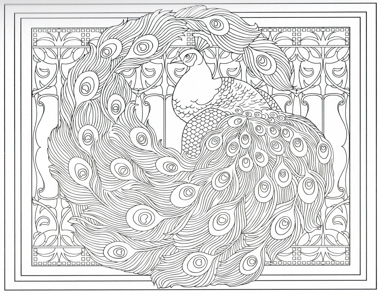 Peacock Coloring Page 27 31 Peacock Coloring Pages
