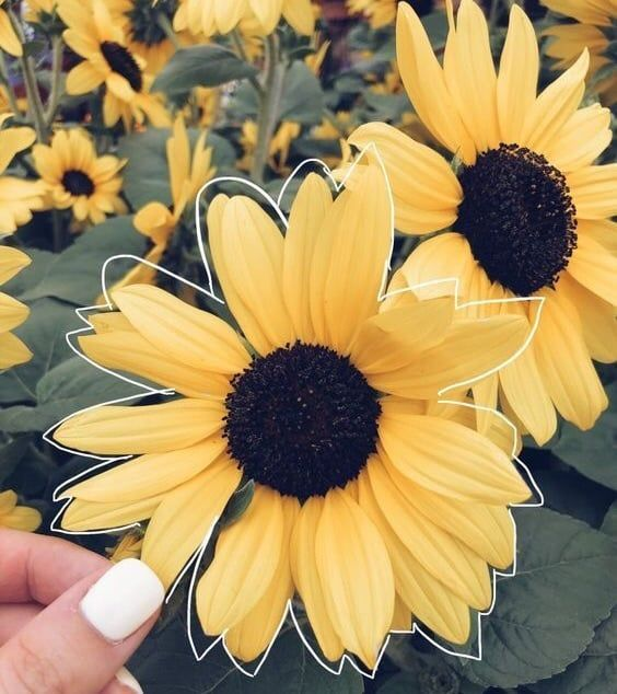 The Gods Themselves Flower Iphone Wallpaper Yellow Aesthetic Pastel Sunflower Wallpaper