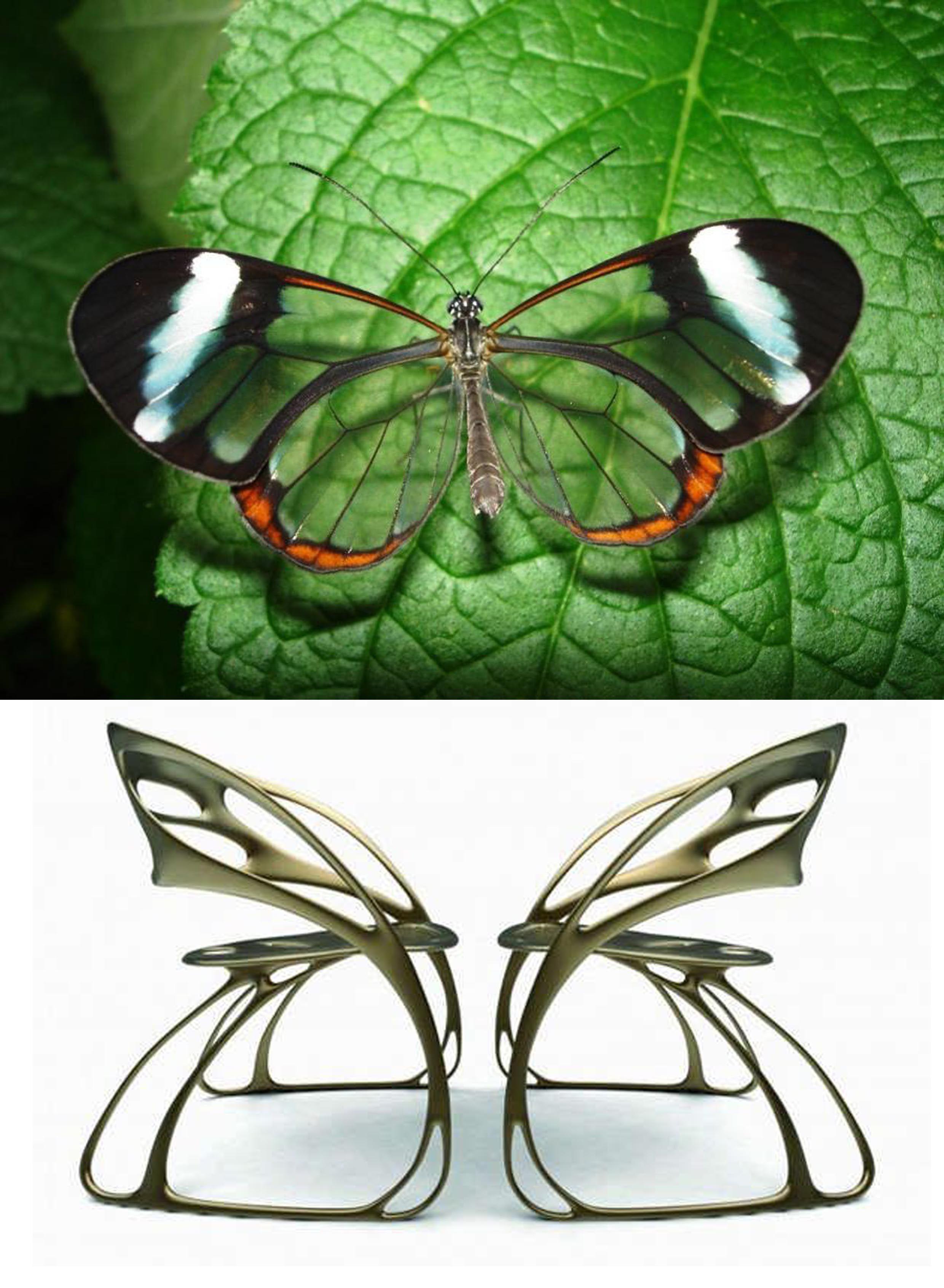 Majestic Monarch Chairs By Eduardo García Campos #Biomimesis #Biomimeticau2026