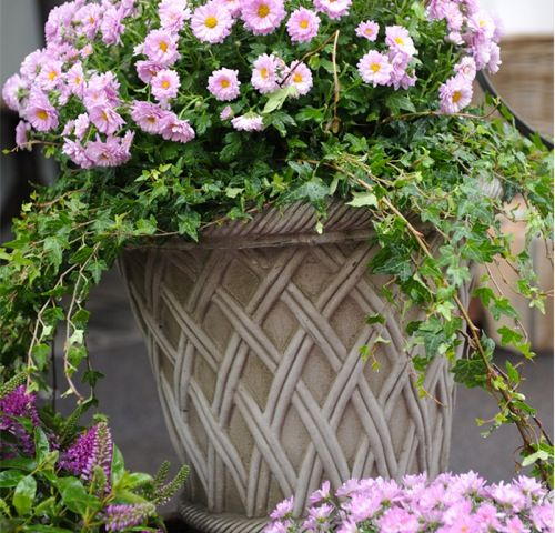 beautiful basket style  pot