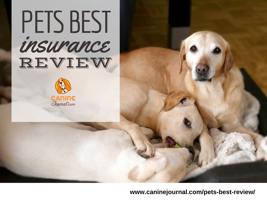 Pets Best Review Putting Your Pets First Caninejournal Com Cool Pets Dog Insurance Pet Insurance Reviews