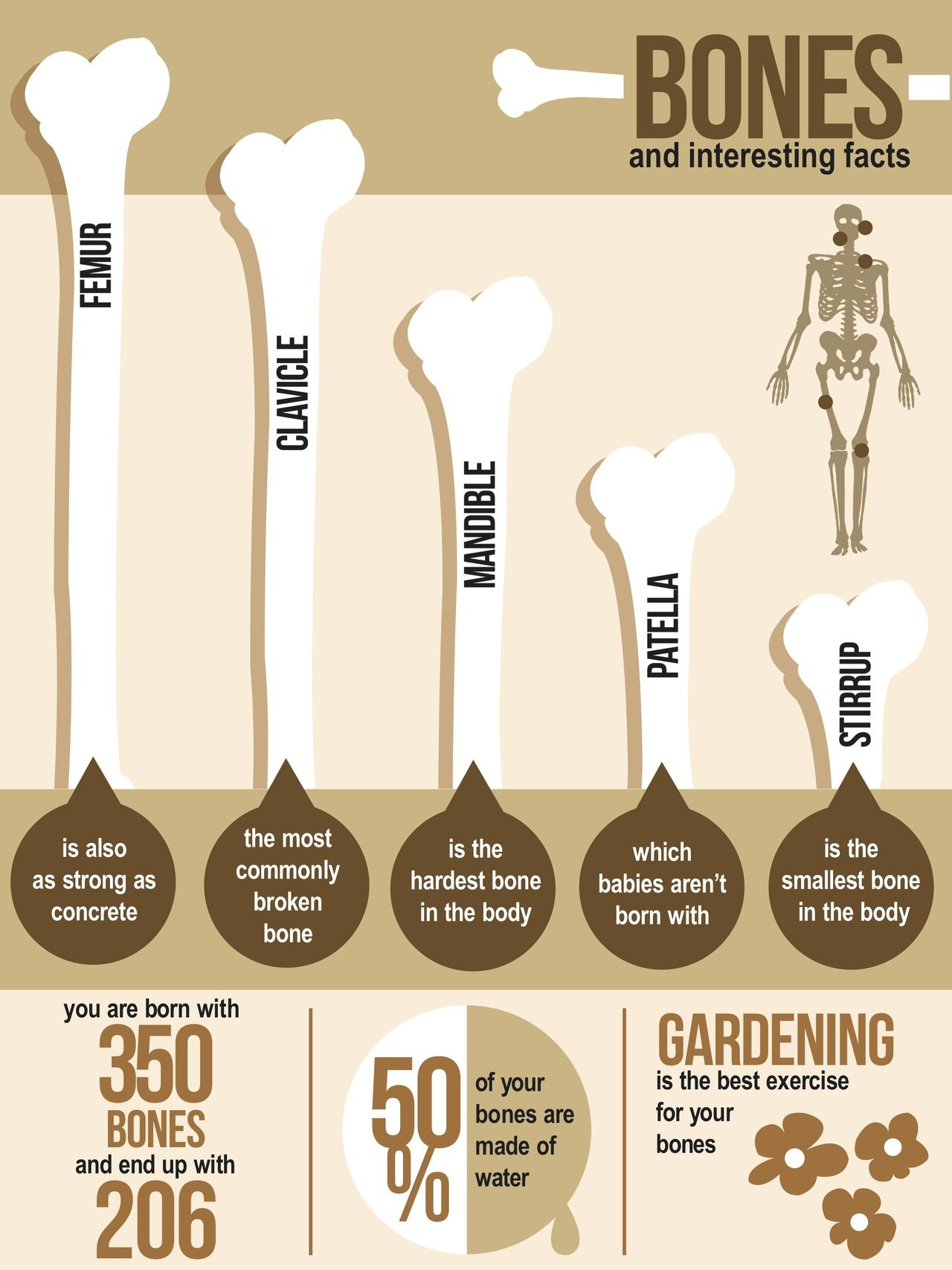 Bones Interesting Facts Gardening Is The Best Activity