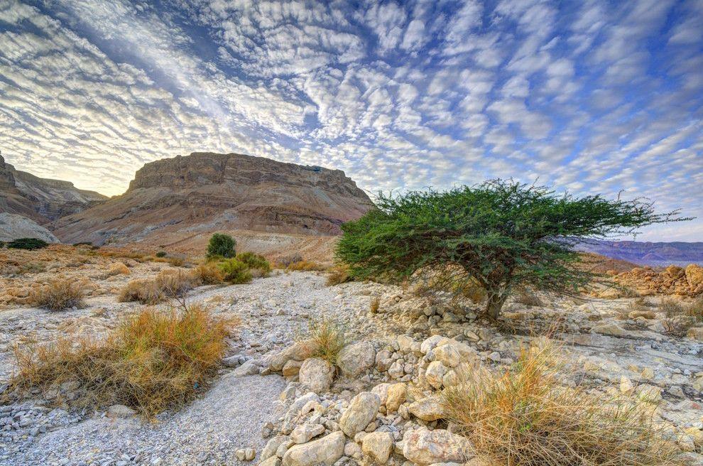 каждом номере природа израиля фотографии это еще все