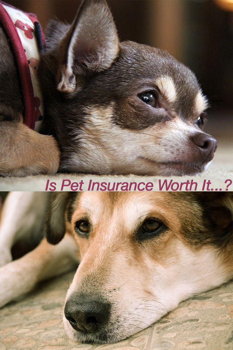 Dog insurance is pet insurance really worth it dog