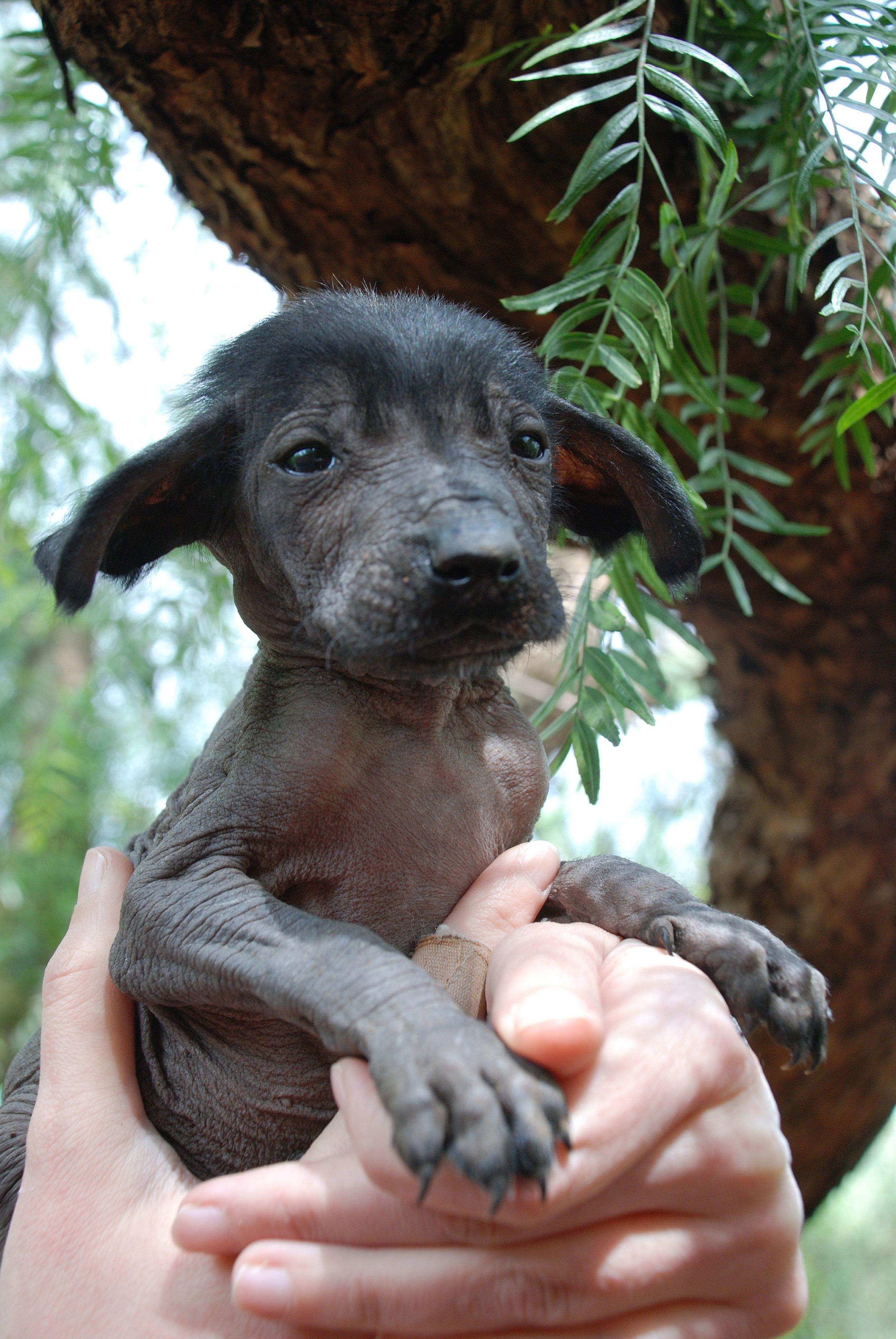 Cachorritos Que Crecieron En La Candela Cachorros Refugios