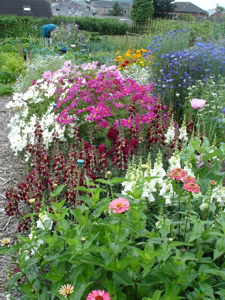 Cut Flower Garden   Picmia