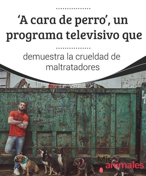 """'A cara de perro', un programa #televisivo que demuestra la crueldad de maltratadores  Hace algunos días en el canal #español Cuatro se pudo ver la primera entrega de un programa televisivo llamado """"A cara de perro"""". Este intenta #concienciar a los espectadores sobre el #maltrato que sufren los animales"""