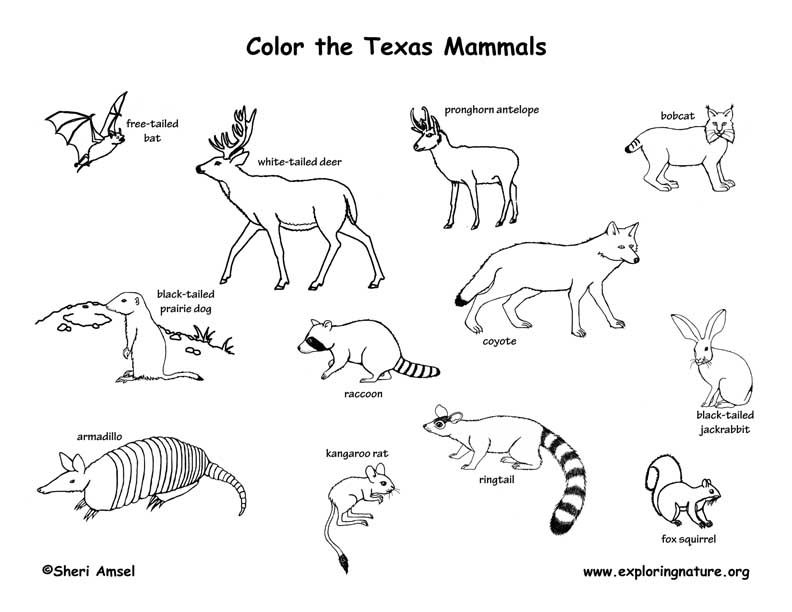 Image Result For Pictures Of Mammals To Color Coloring Pages