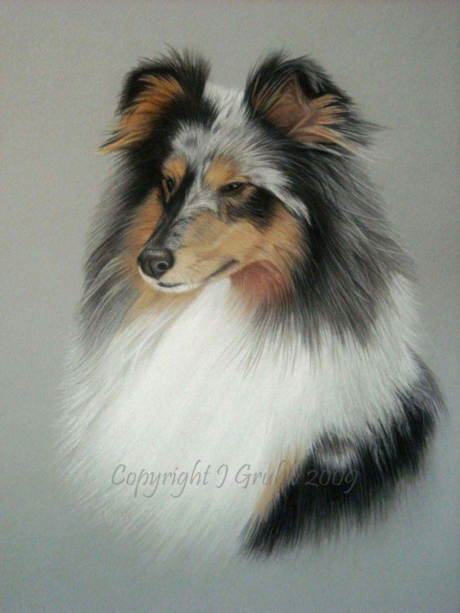 Pastel Pet Portraits Commissions Prices Dog Portraits Pet