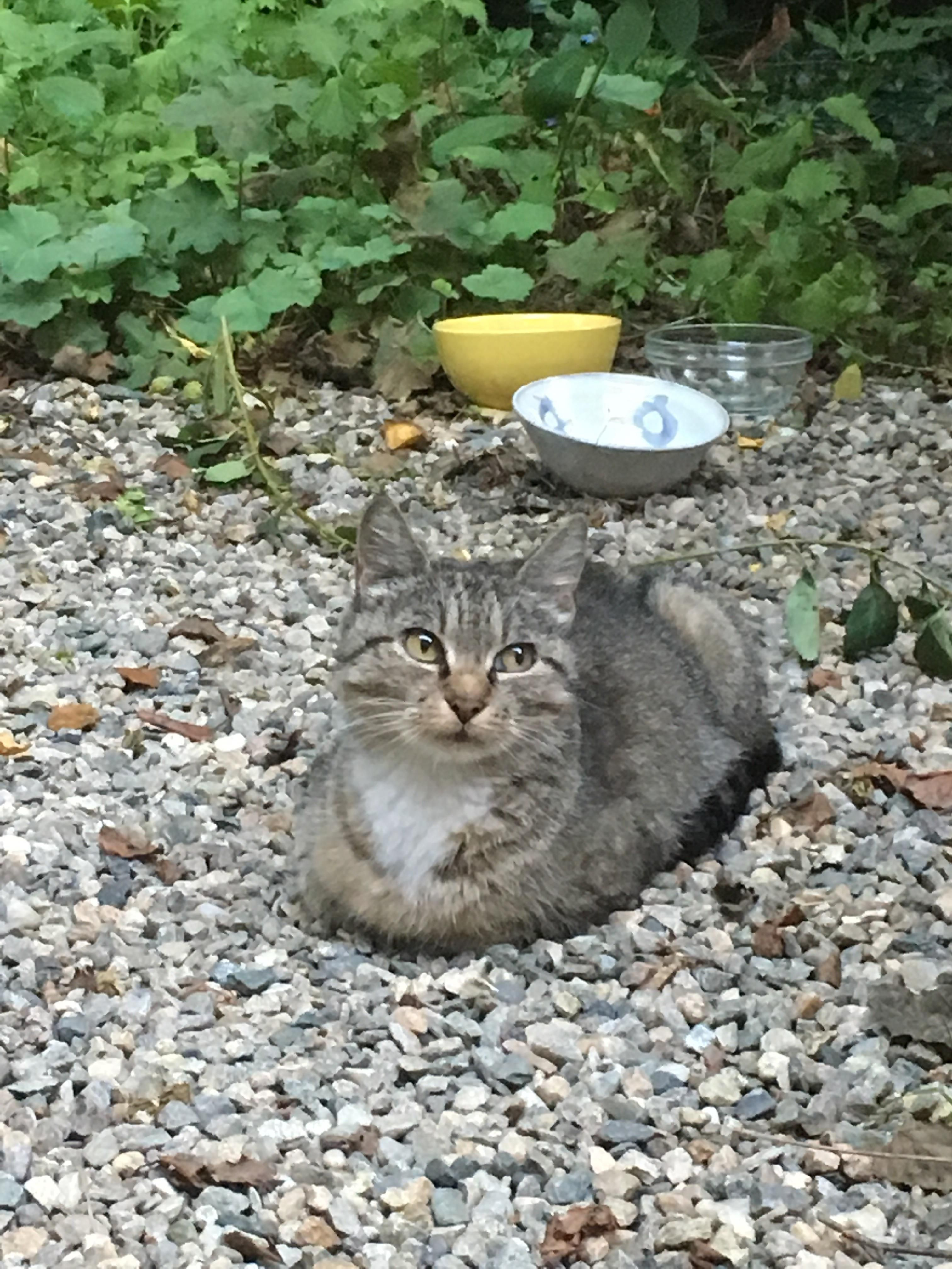This stray cat comes to my yard. I feed it then it goes ...