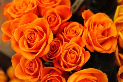 ورود جميلة خلفيات ورود جميلة جدا ورود جميلة طبيعية Zina Blog Flower Photos Flower Images Orange Roses