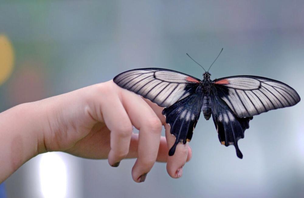 Tagfalter فراشات Butterflies صور صور فراشات جميلة فراشات روعة Butterfly Wallpaper Hippie Wallpaper Colorful Wallpaper