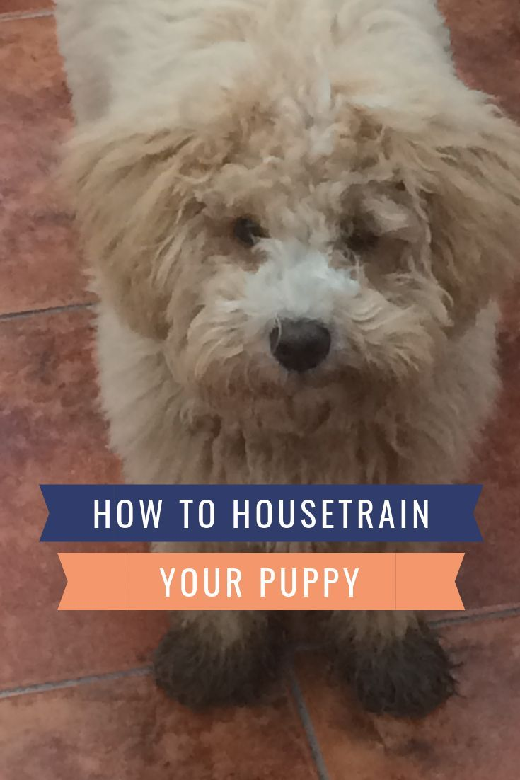 How to potty train a puppy fast hasty house training
