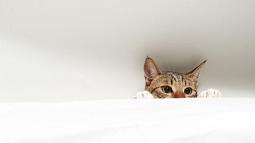 2048x1152 Wallpapers Kitten Wallpaper Cat Wallpaper