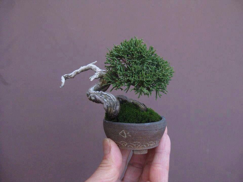 mame bonsai mame bonsai kusamono shitakusa bonsai garten ideen pflanzen. Black Bedroom Furniture Sets. Home Design Ideas