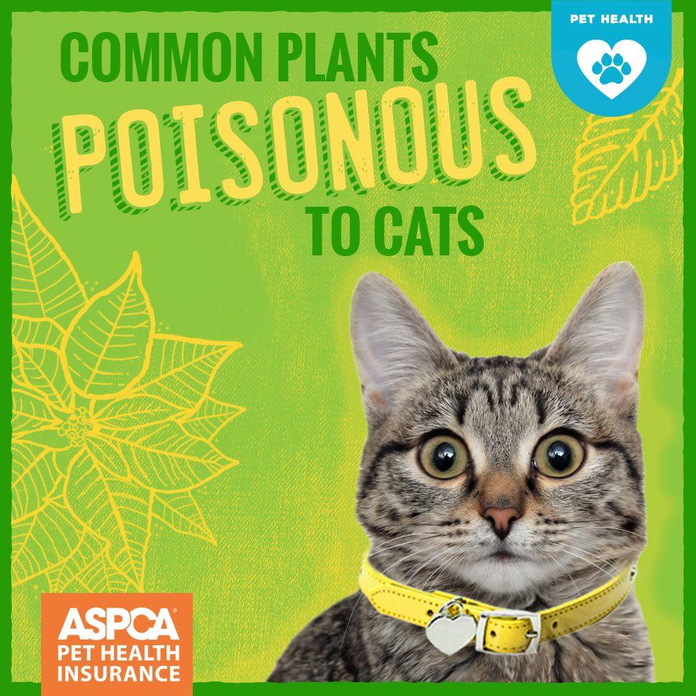 25 Common Plants Poisonous to Cats Cat plants, Cats