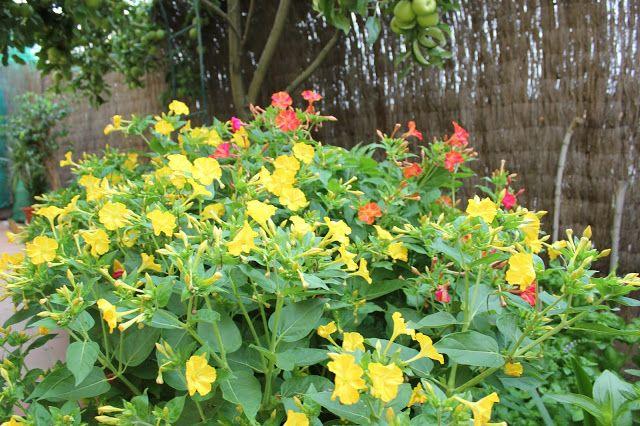 ARTE Y JARDINERÍA DISEÑO DE JARDINES: Flores y plantas de Arte y Jardinería