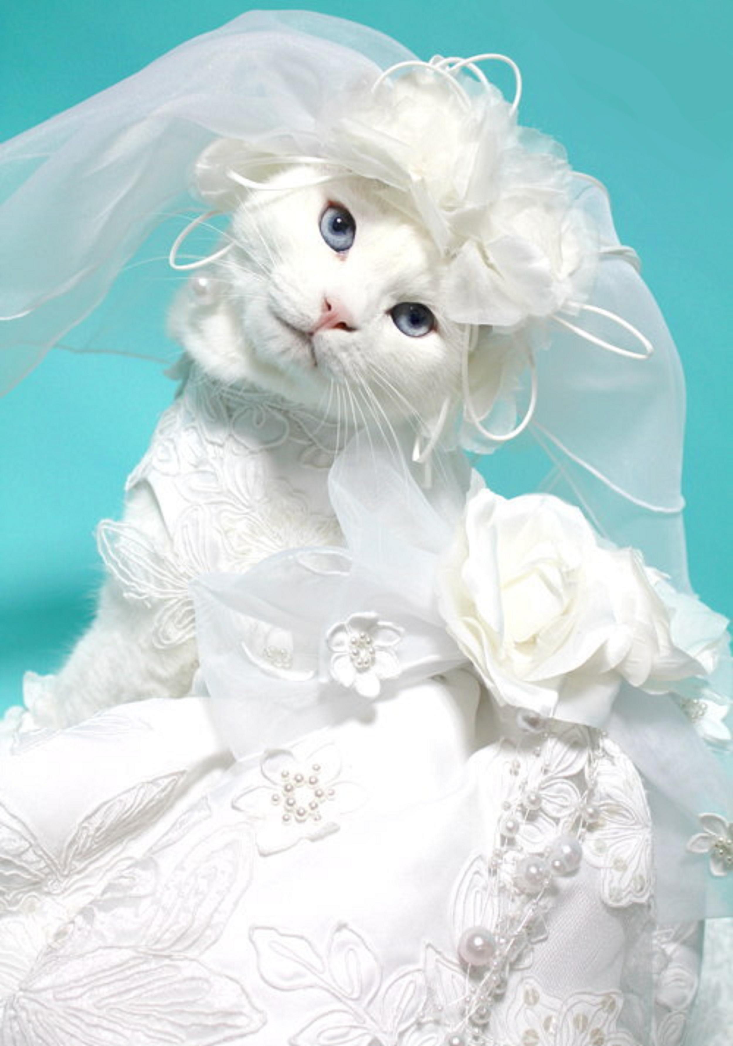 образцы картинки с кошками о свадьбе фотосалонов пунктов