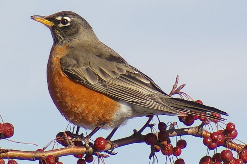 What Are the Most Common Backyard Birds in the U.S ...