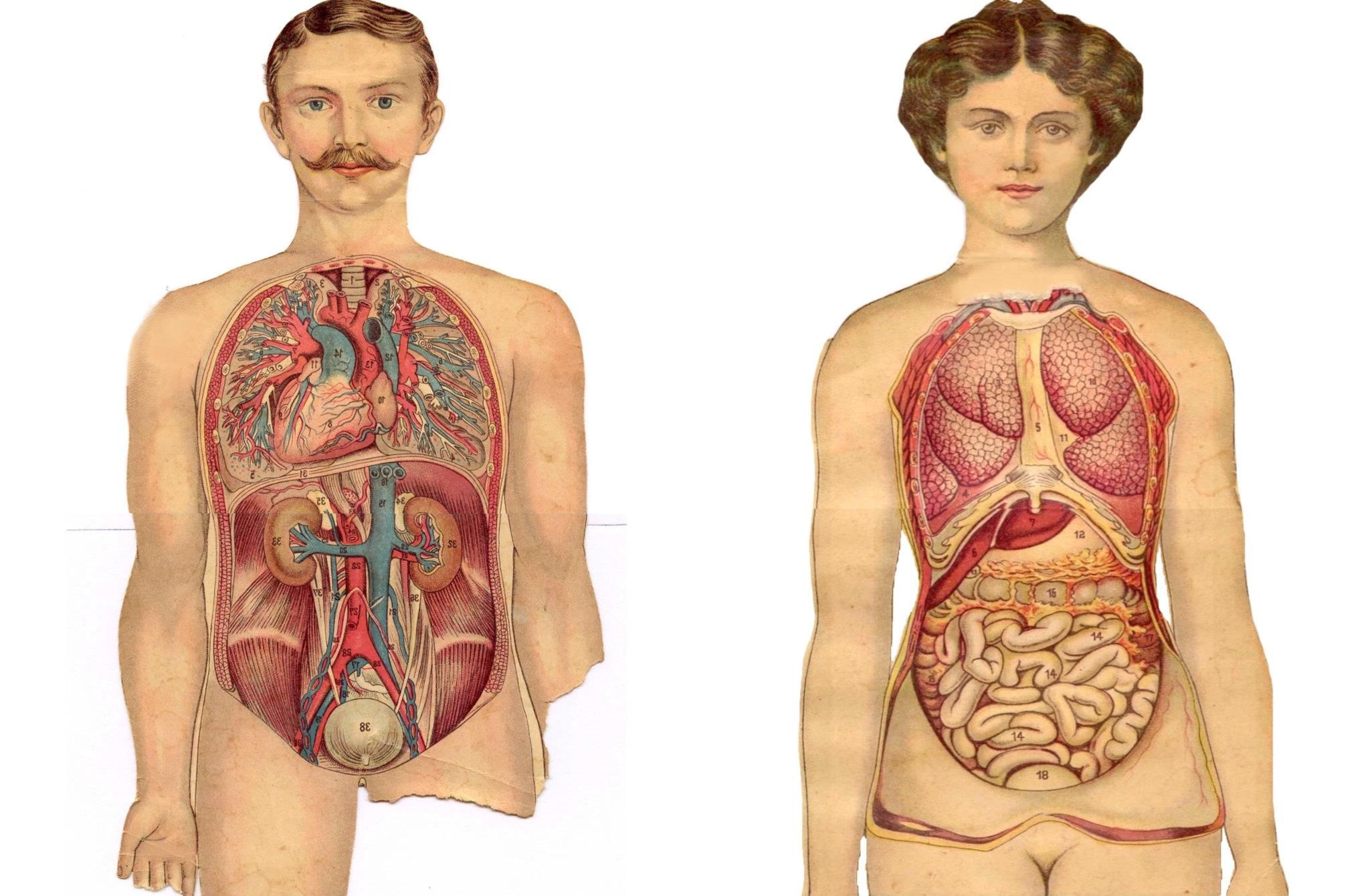 And The Woman Is Intestine Medical Paper Dolls In 2018 Pinterest