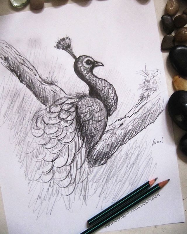 Reposting Franciscovillarrealart A Peacock Drawing Peacock