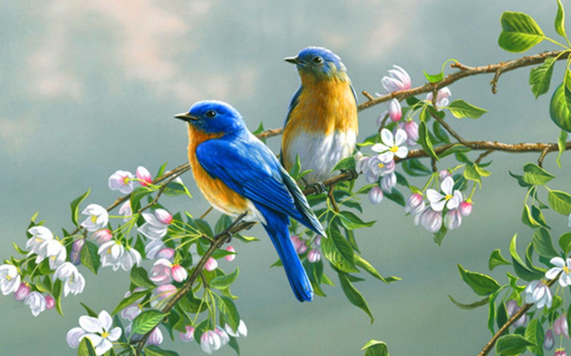 Invisible Wings-Bird Photography Wallpaper Wallpapers List - page ...