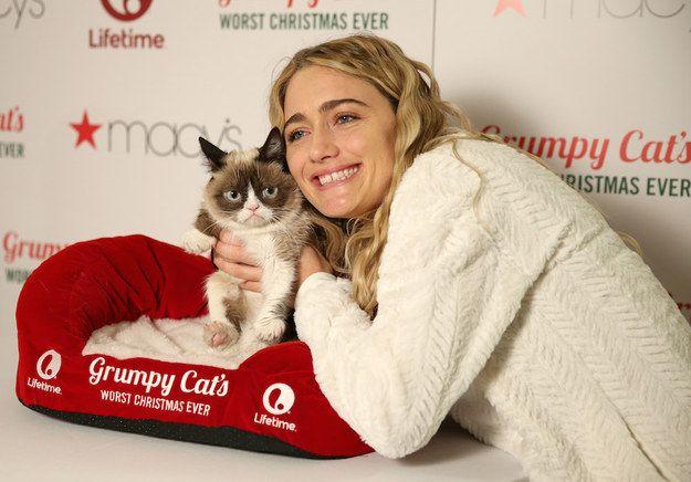 """""""самый злой кот в мире"""" стал новой интернет-звездой (фото."""