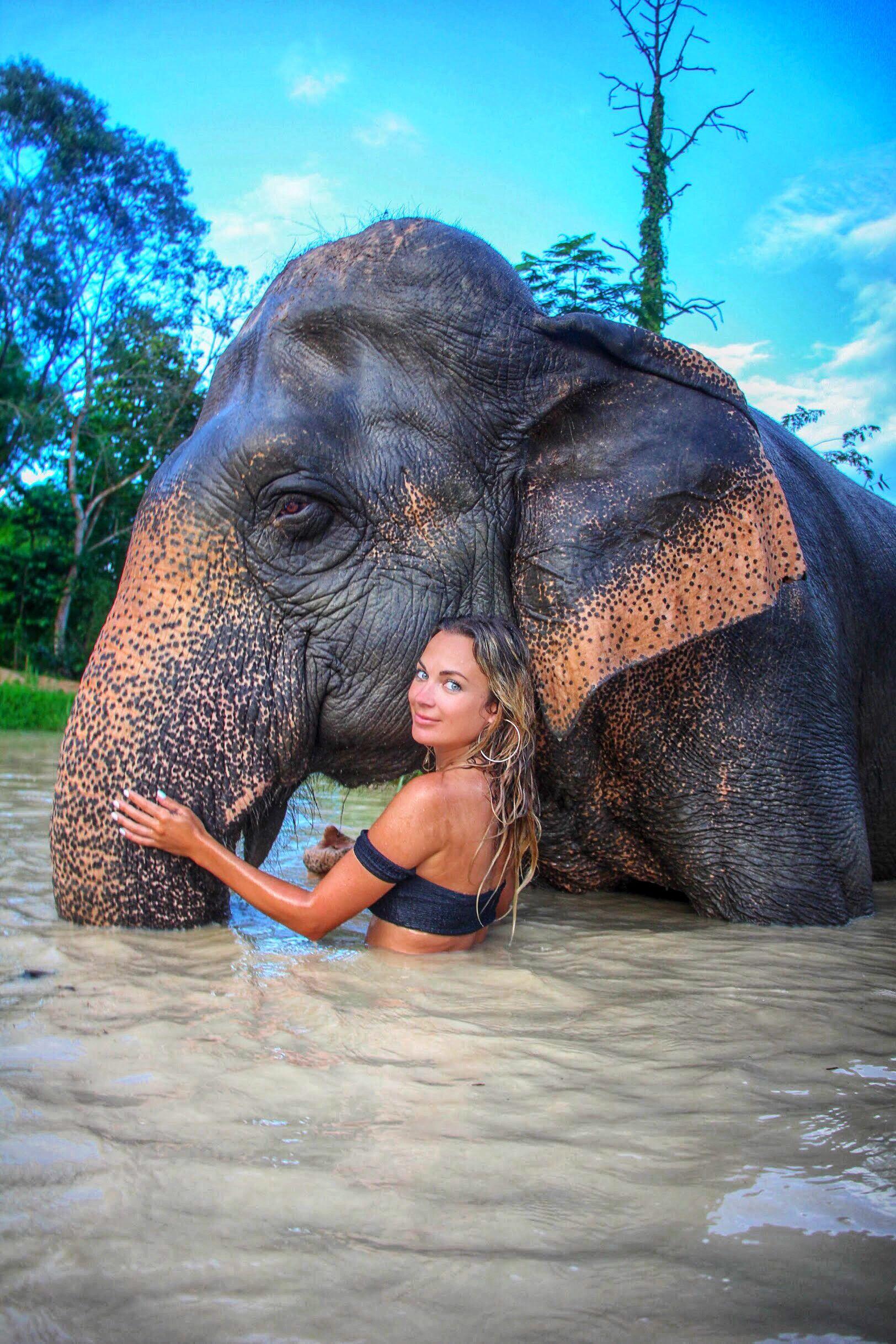 chiang mai ethical elephant sanctuary mylifesamovie.com