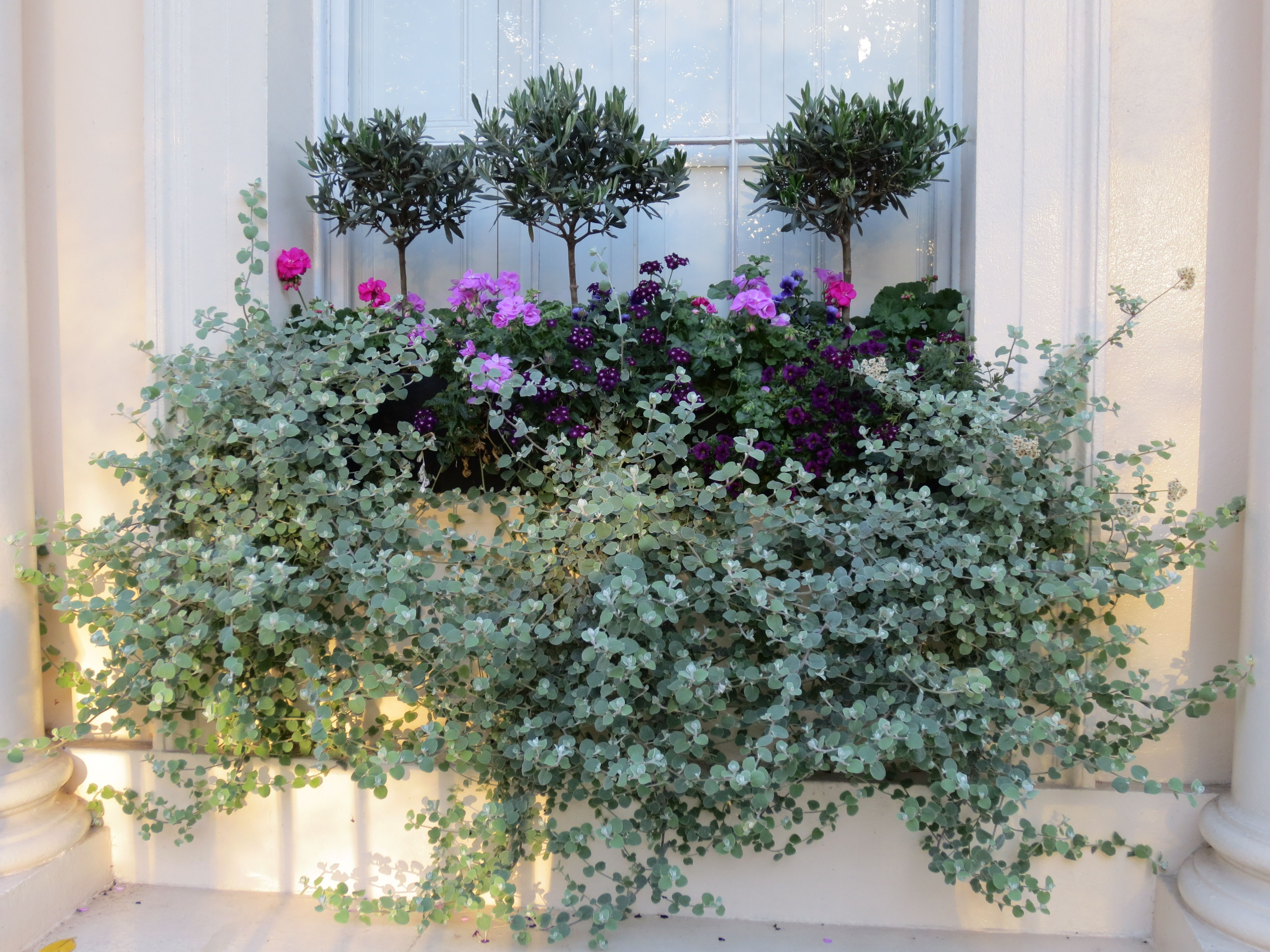 ideas for planting window boxes Google Search