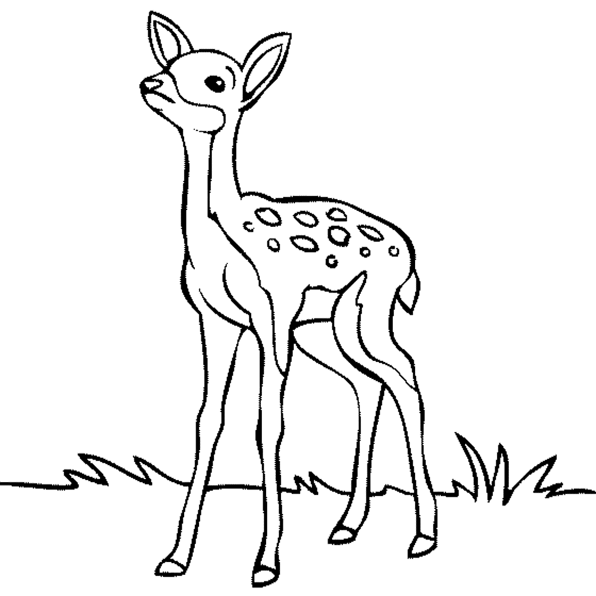 Baby Deer Clipart Black And White Clipartsgram