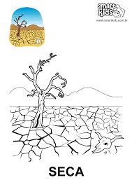 resultado de imagem para desenhos da vegetação brasileira para