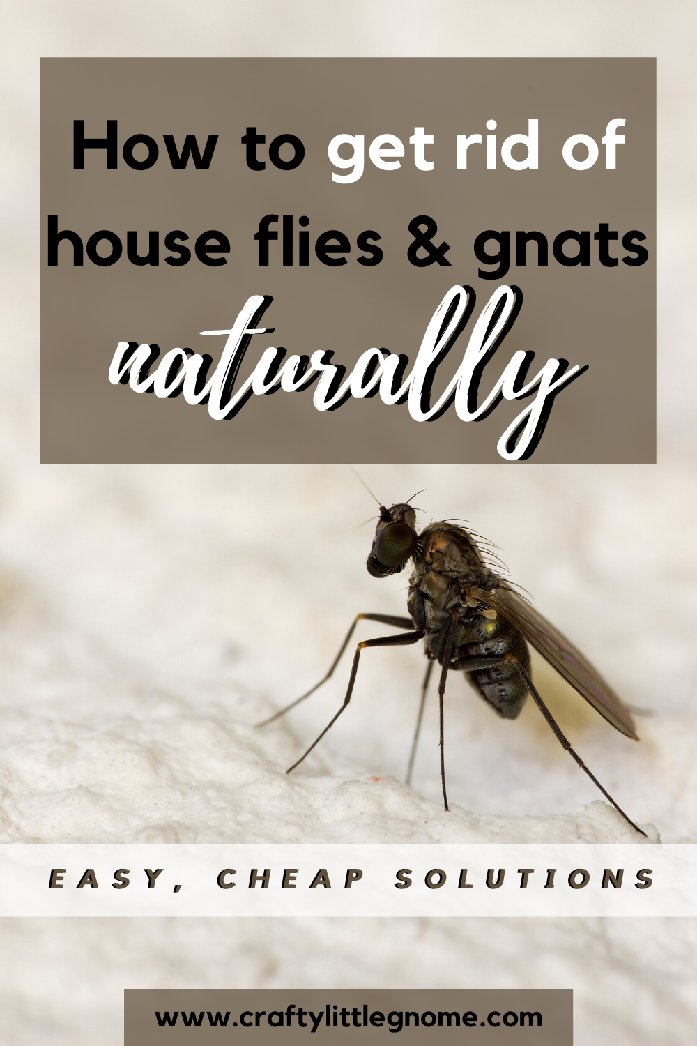 Why Are There Flies In My House All Of A Sudden Crafty Little Gnome Cleaning Hacks Bedroom Get Rid Of Flies Bedroom Organization Diy