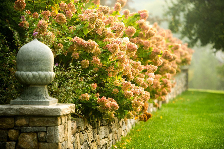Janice Parker Landscape Architects: hydrangeas, stone wall, acorn ...