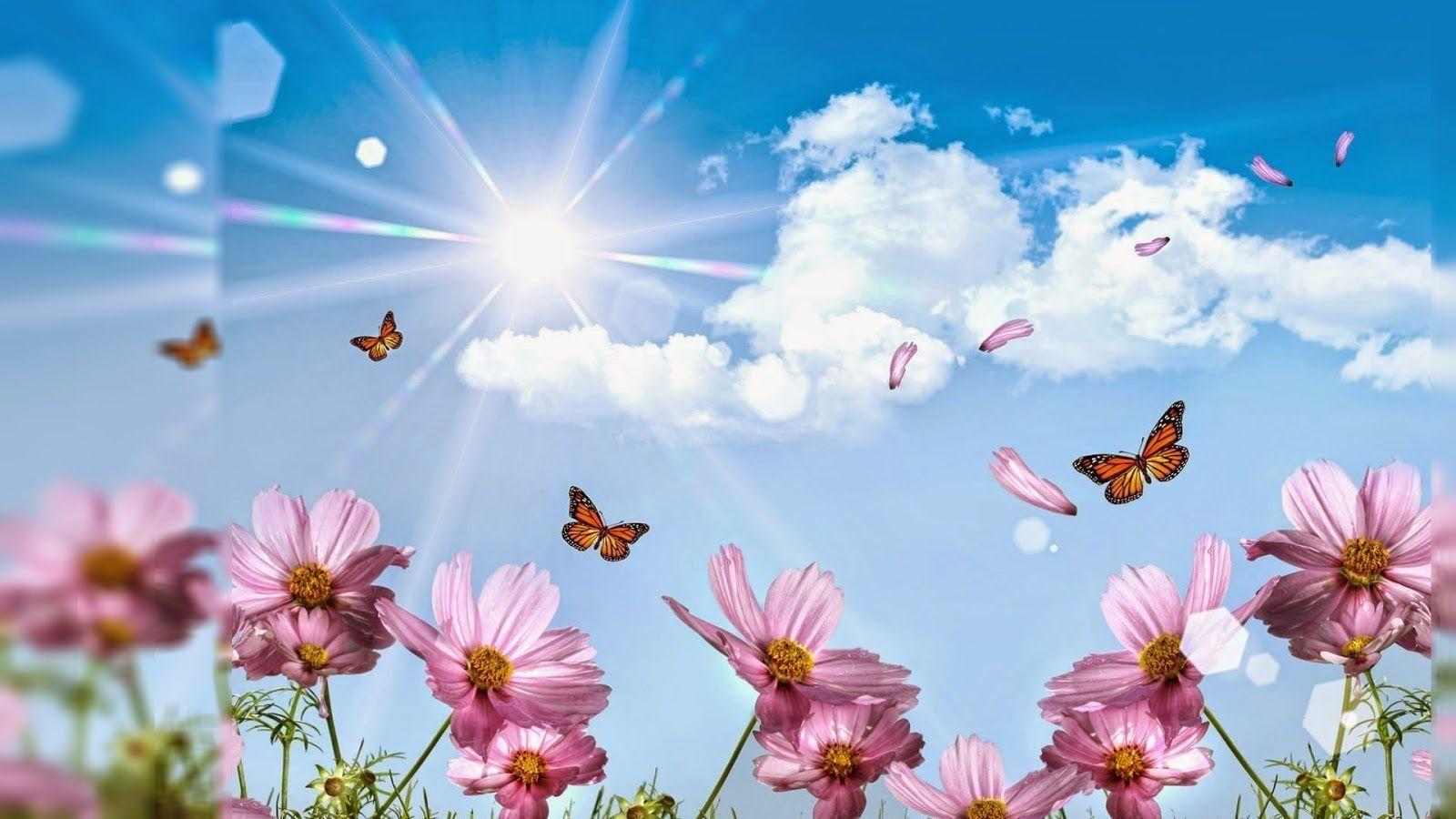 Pin By Kenda Davis 3 Peat On Home Style Flower Desktop Wallpaper Desktop Wallpapers Backgrounds Nature Wallpaper