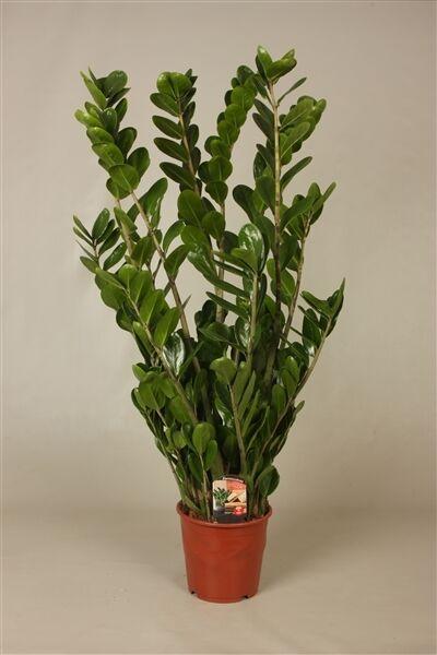 7 Lucky Plants